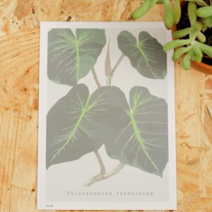 Philodendron Verrucosum Postcard A6